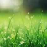 Grassprietjes die wel groen zijn